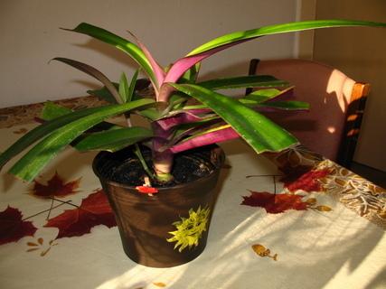 FOTKA - Že by podzimní palmička?