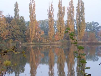 FOTKA - Topoly u vody