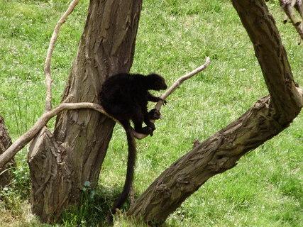 FOTKA - *.lemur.*