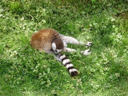 FOTKA - **.lemur.**
