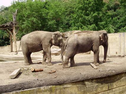FOTKA - *.sloni.*