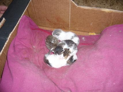 FOTKA - Čerstvá koťata.