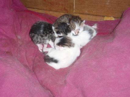 FOTKA - Čerstvá koťata..