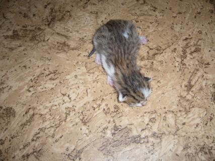FOTKA - Čerstvá koťata..,