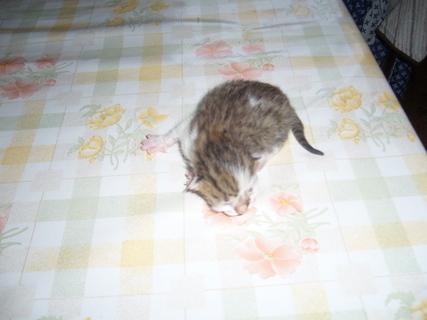 FOTKA - Čerstvá koťata...