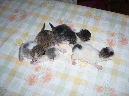FOTKA - Čerstvá koťata....