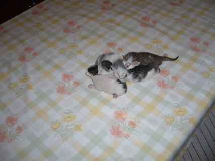 FOTKA - Čerstvá koťata.......