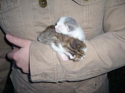 FOTKA - Čerstvá koťata..........