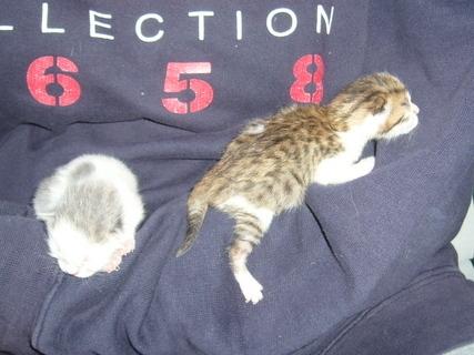 FOTKA - Čerstvá koťata..........,,