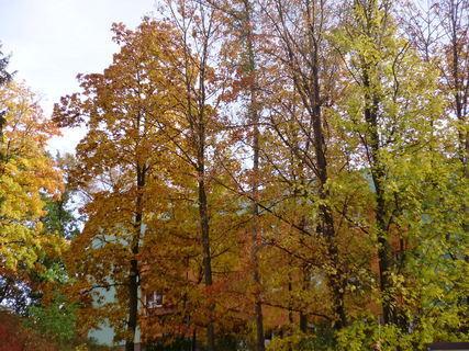 FOTKA - Podzimní barvičky-