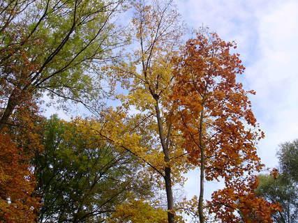 FOTKA - Barvičky podzimu-