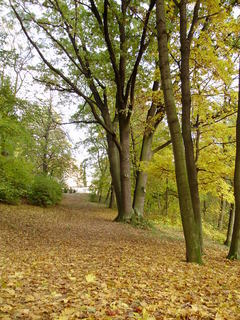 FOTKA - Nádherná procházka parkem na podzim