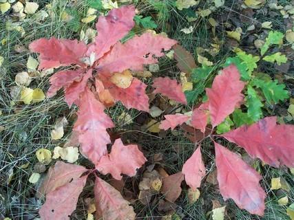 FOTKA - Příroda si hraje s barvičkama