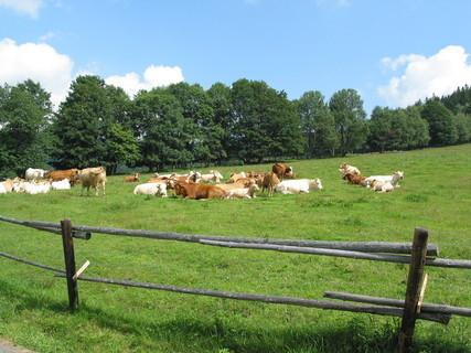 FOTKA - Pastviny na Šumavě
