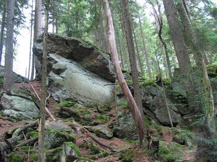 FOTKA - Šumavské lesy