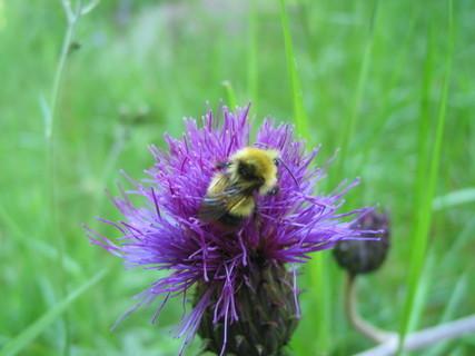 FOTKA - Kapku nektaru