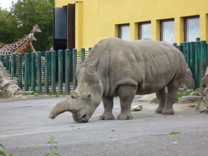 FOTKA - Nosorožec