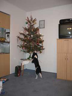 FOTKA - Kde je ten dárek