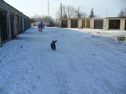 FOTKA - Dan v zimě