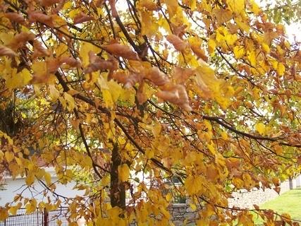 FOTKA - podzimní ......