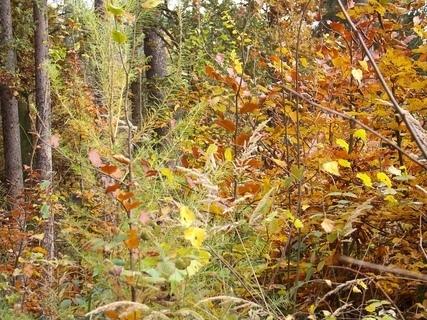 FOTKA - sobotní podzimní foto