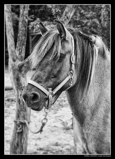 FOTKA - Pěkný - Džínka moje