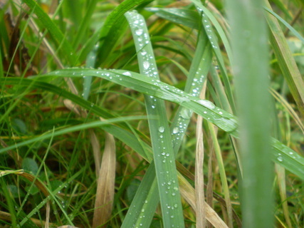 FOTKA - Kapky deště I
