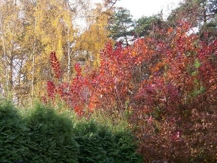 FOTKA - stále ještě hezký podzim