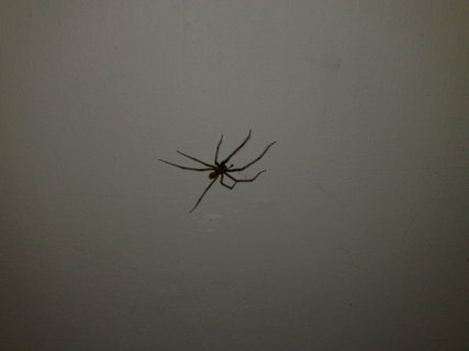 FOTKA - Pavou�ek 2