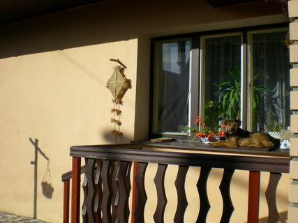 FOTKA - na okně seděla kočka,..?