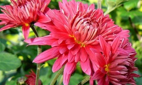FOTKA - květy listopadek