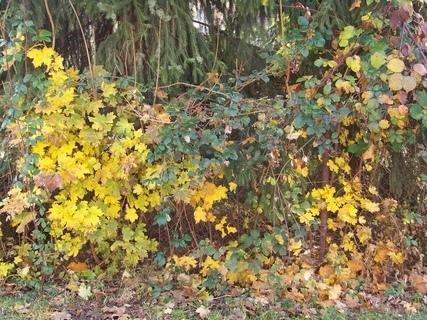 FOTKA - u nás je ještě podzim .......
