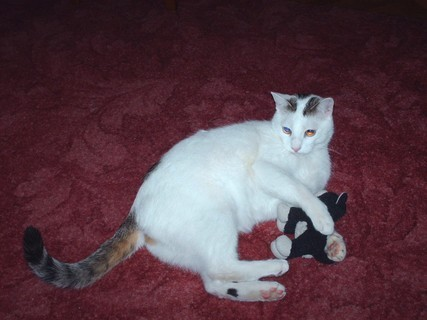 FOTKA - Kocour  m�ho bratra s obl�benou hr��kou - ��jen 2009.