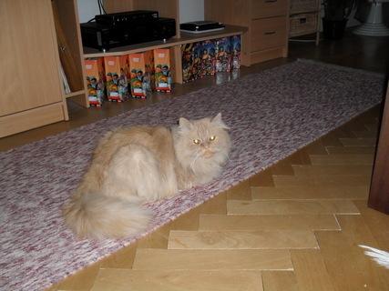 FOTKA - Garfield - nové