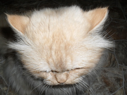 FOTKA - Garfield - něco jsem našel