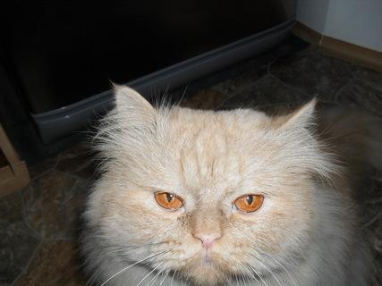 FOTKA - Garfield - kuk