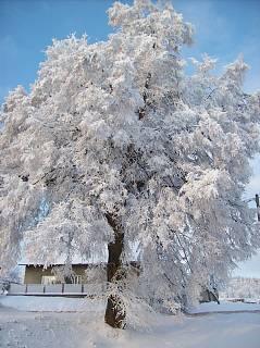 FOTKA - Zima 2008