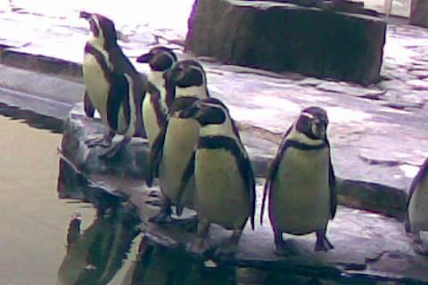 FOTKA - tučnacii