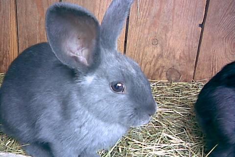 FOTKA - králík matoušek