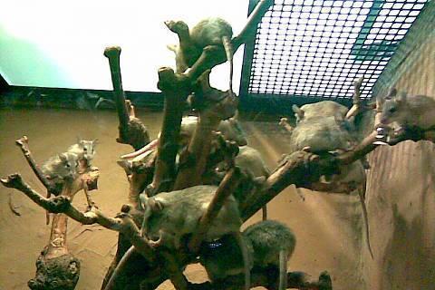 FOTKA - myšky v zoo