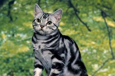 FOTKA - Takhle vypadá naše kočka . . .
