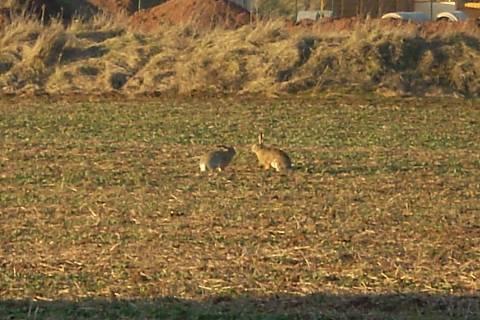FOTKA - králíčci