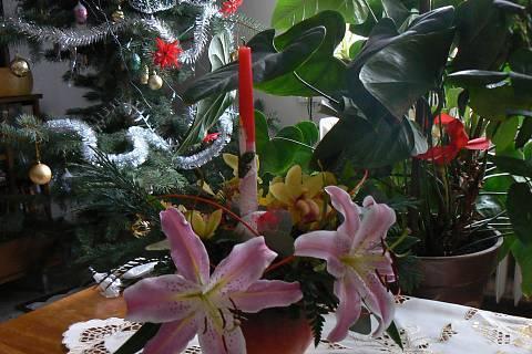 FOTKA - vánoční výzdoba u stromečku