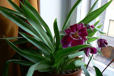 FOTKA - orchidej 2