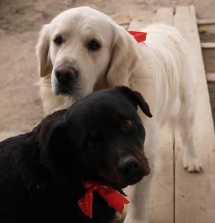 FOTKA - Naši psi na Štědrý den :o)
