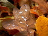 Kapky na podzimním listí