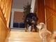 Serie : Roxy nechce pustit Aishu nahoru  / 2 /  - 23.11.2009.