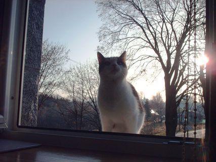 FOTKA - Nelly  na okně v kuchyni - 20.11.2009.