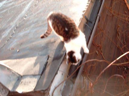FOTKA - Serie : ránní procházky Nelly- 20.11.2009.