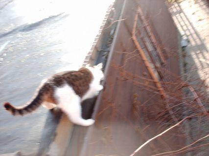 FOTKA - Nelly na střeše, 20.11.2009.
